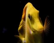 fish-8