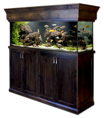 custom-fishtank