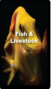 fish-portfolio