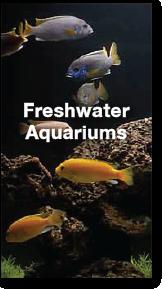freshwater-portfolio