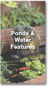 ponds-portfolio