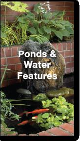 ponds-portfolio