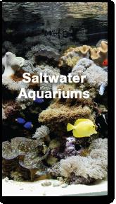 saltwater-portoflio