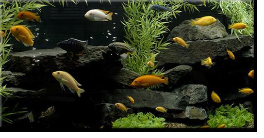 Aquarium-cleaning