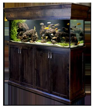 custom-fishtank