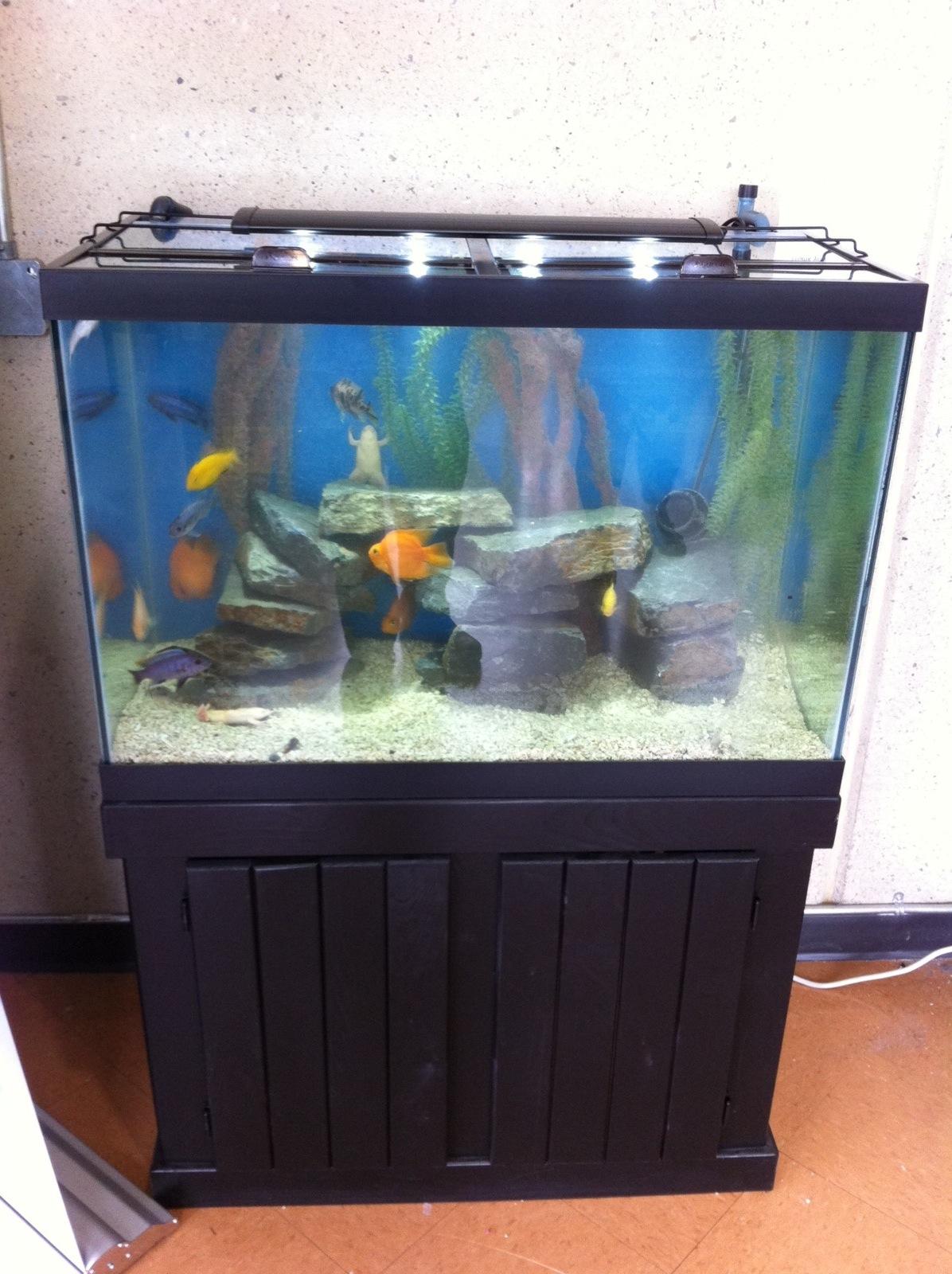Caring for your brand new aquarium.