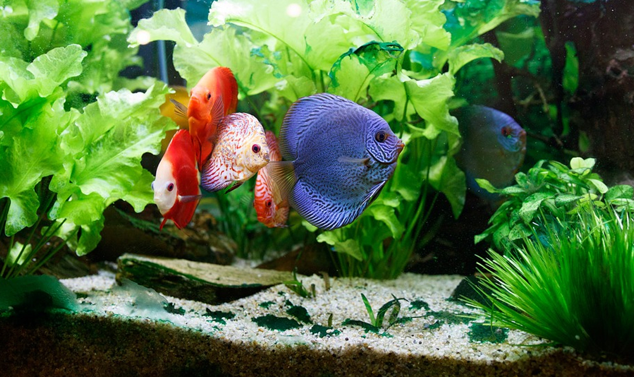 Custom aquarium tank maintenance 101