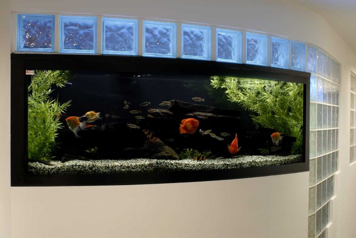 What you need to know about ordering a custom fish tank