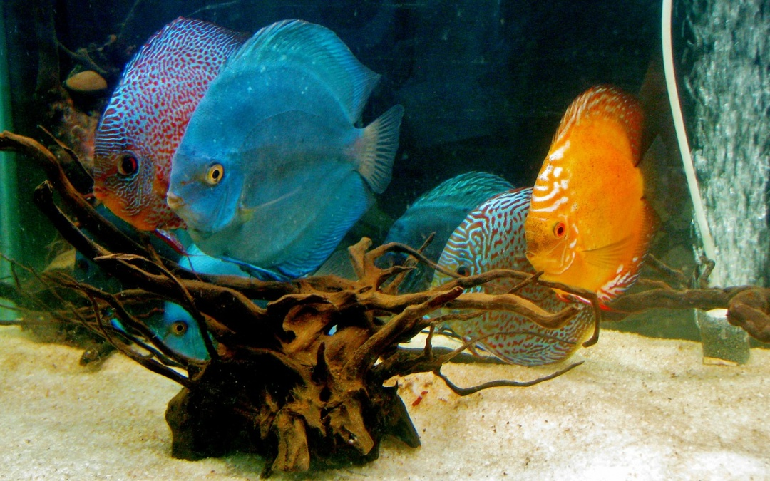 How to choose between a fresh and saltwater custom aquarium