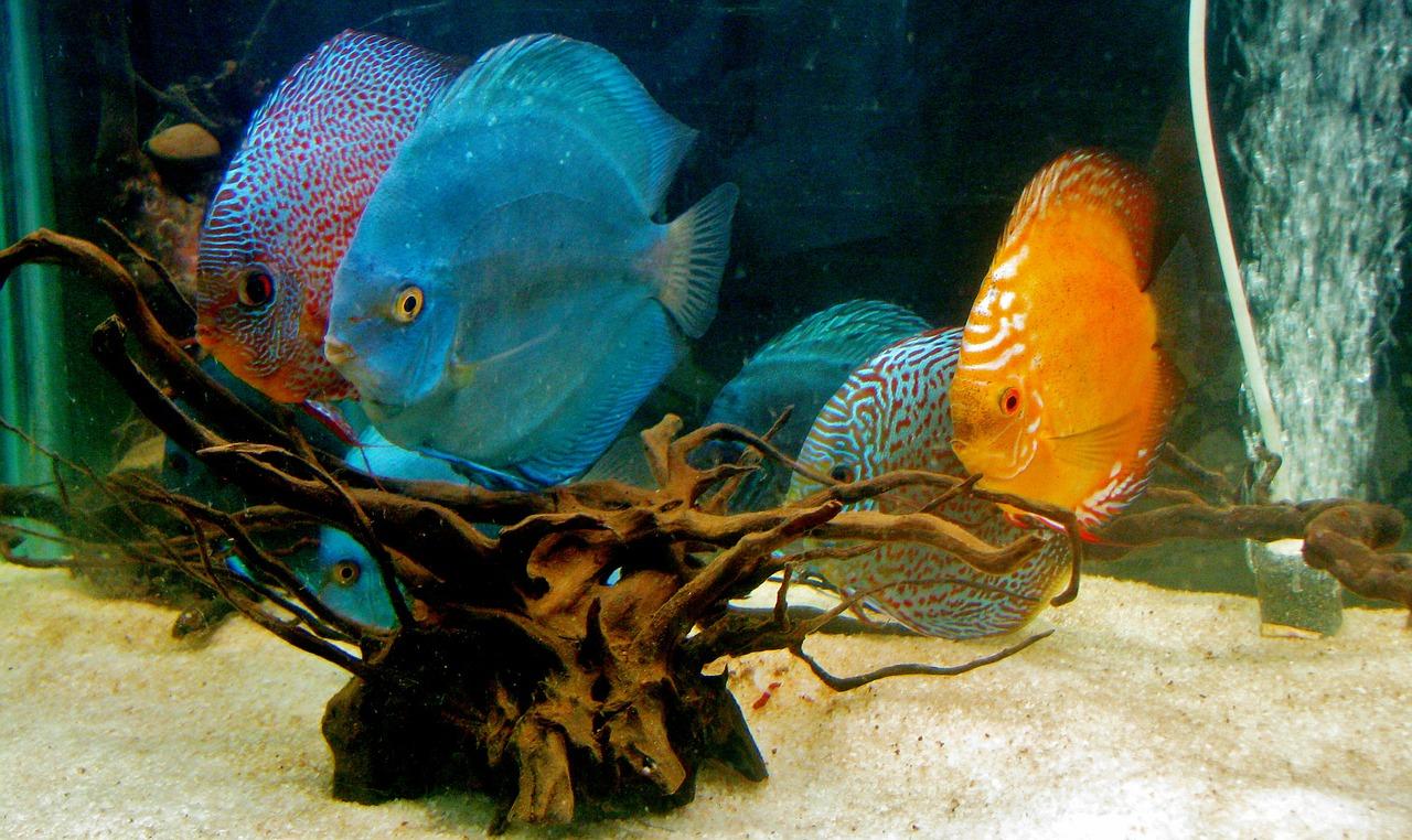 How to choose between a fresh and saltwater custom aquarium