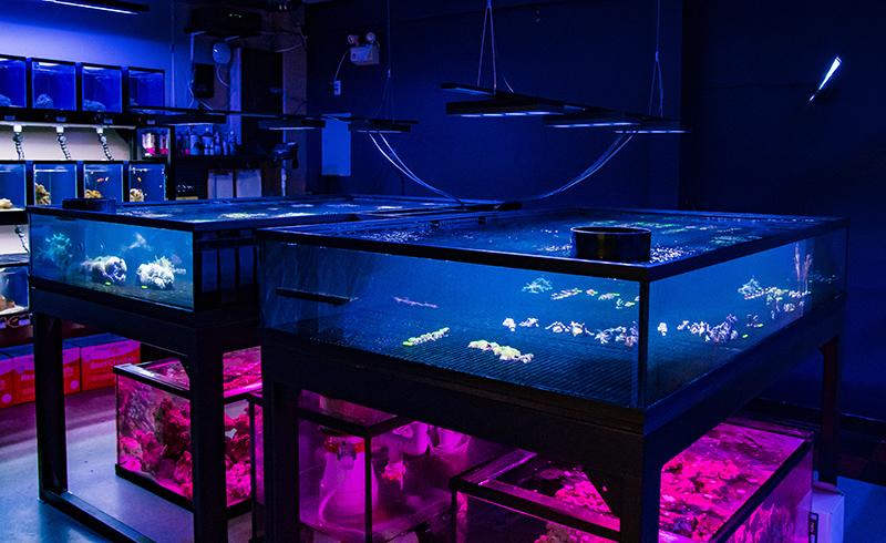 coral-tanks